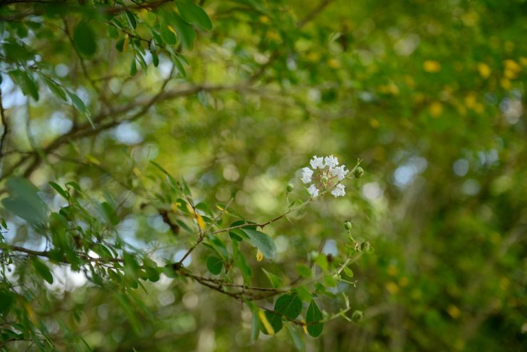 2-creekside-plantation-mooresville-alabama-wedding-photographer