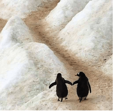 2 PENGUINS ON ICE copy