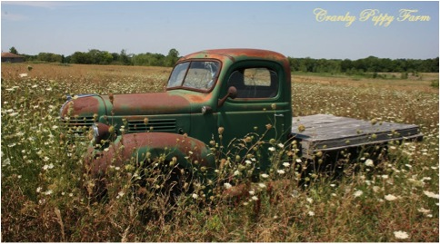 3-1 RUSTY TRUCK IN FIELD