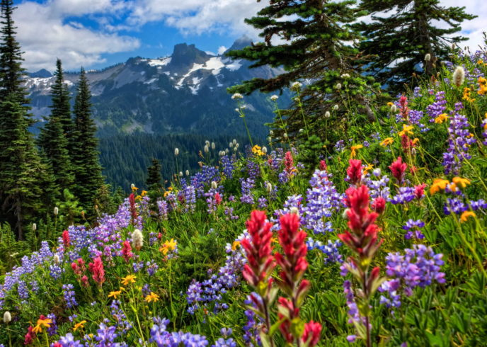 Wildflowers Mountain meadow