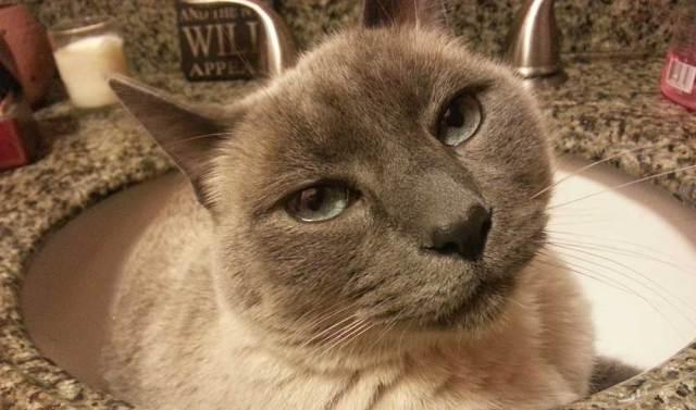 I am a Moon Dog Cat - Meow