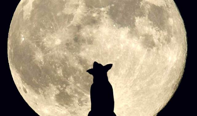 I am a Moon Dog Now!