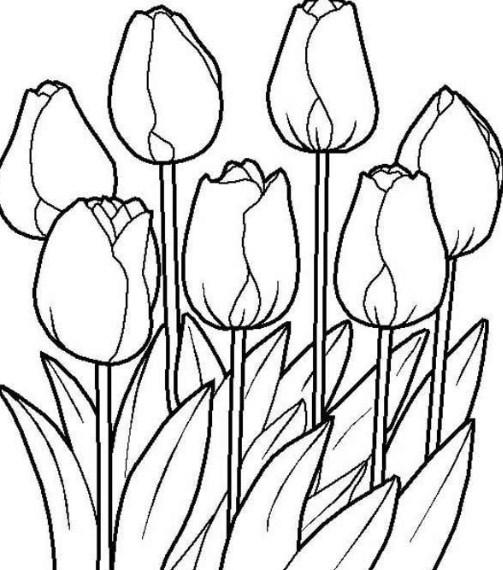 39+ Gambar Sketsa Bunga Indah, Sakura, Mawar, Melati, Matahari ...