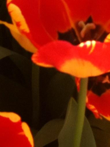 spring 116
