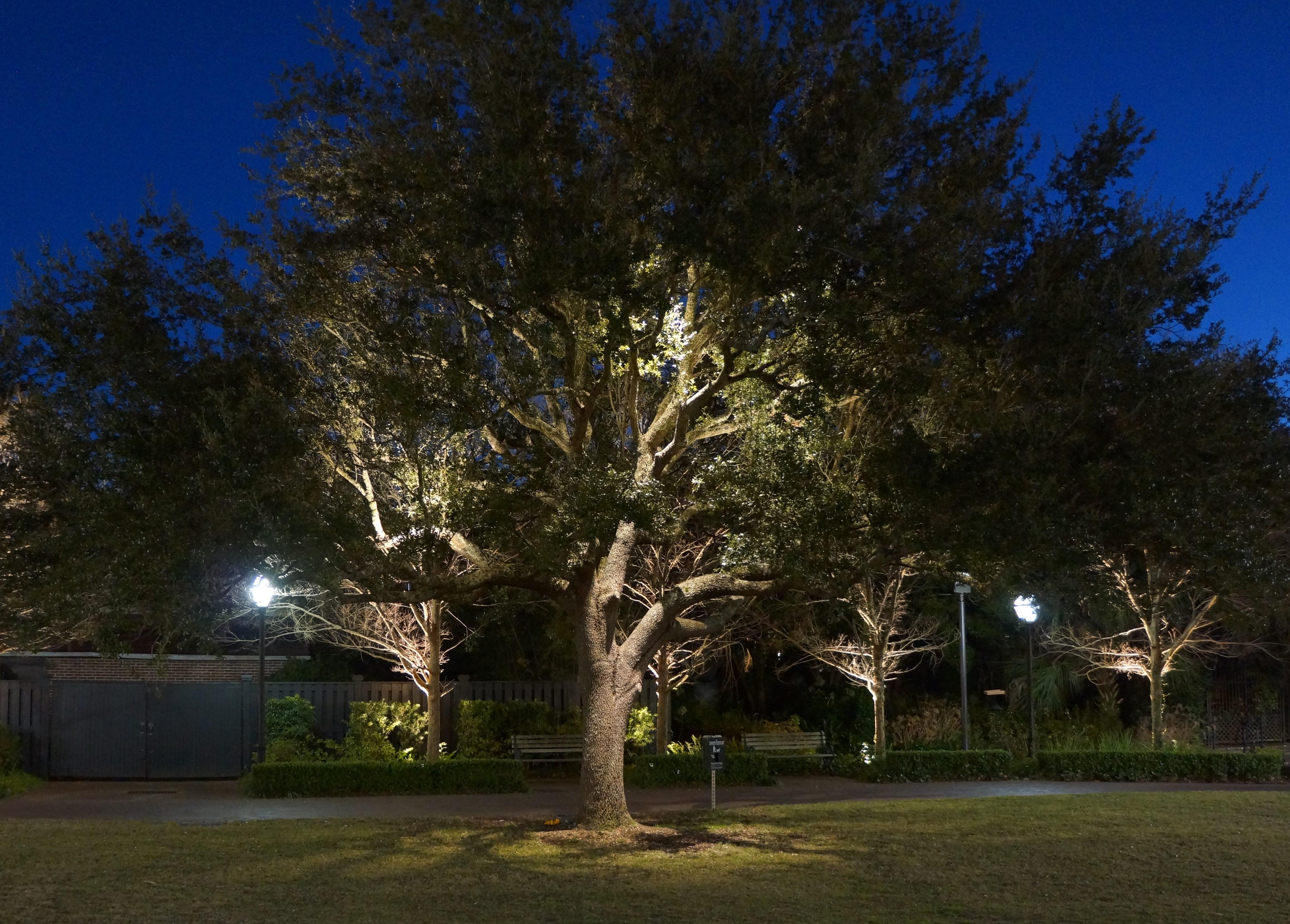 custom landscape lighting installation