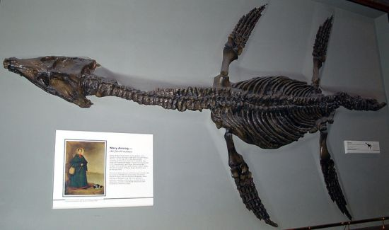 Mary Anning 瑪麗·安寧 英國早期古生物學家215歲誕辰紀念