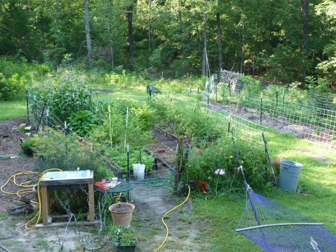"""Looking at the """"Cornfield Garden"""" from the upstairs window."""