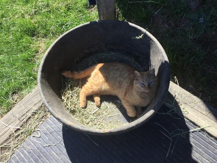IMG_6048 Cat