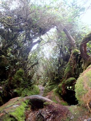 Mossy Forest/Gunung Irau Trek