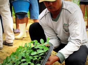Transplanting activity during the Gardening For Food Programme
