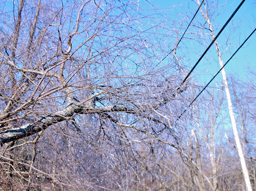 tree-and-wire