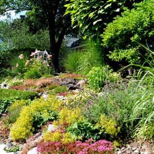 Sedum, Rock Garden Assortments Plug Tray