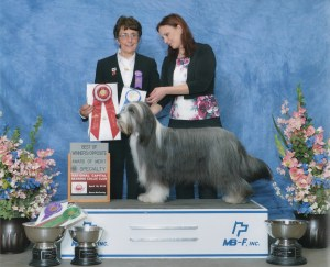 Rockstar! Scarlett goes BOW/BOS at the NCBCC Specialty, 4/18/14 Judge Sue Nicholls-Ward, Bumbleridge Bearded Collies