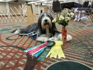 High Scoring Champion in Obedience!