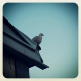 My turtledove friend, meeting each other on a daily basis