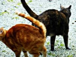 Féfé et Kajou jouent