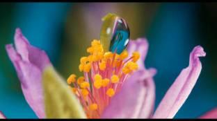 pollination 04