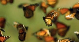 pollination 05