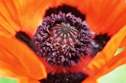 pollination 09