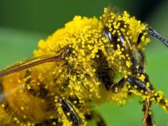pollination 12
