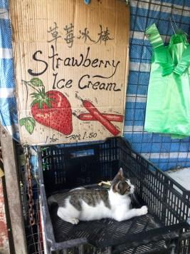 I'll take the cat, please