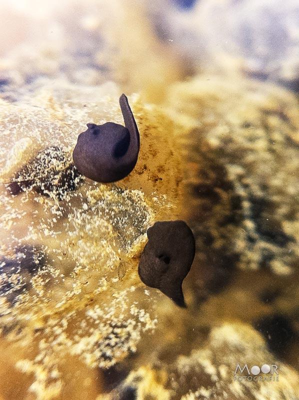 Water fotograferen - leven in het water