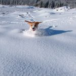 Dog playing in the snow at Dog Friendly Hotel on Rannoch Moor