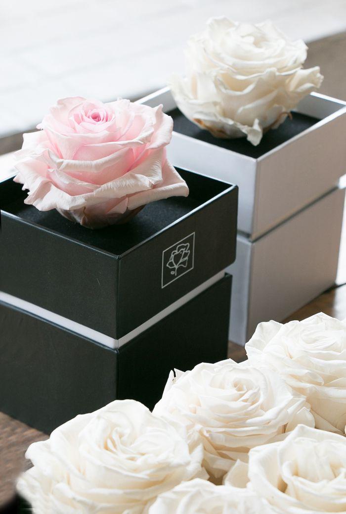 cajas de rosas conservadas