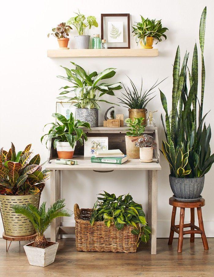 escritorio plantas