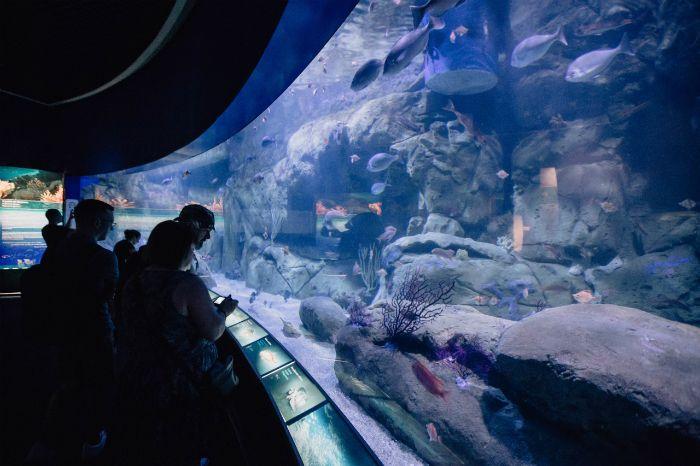 acuario cristalera visitante