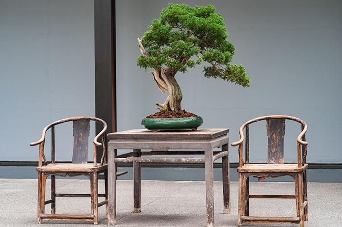 bonsai decoracion oriental