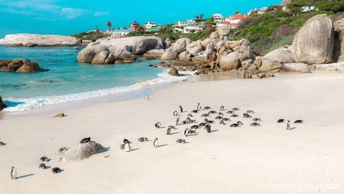 Flora y Fauna en Ciudad del Cabo