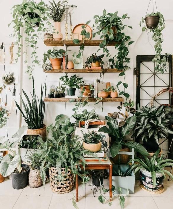 decoracion con plantas verdes