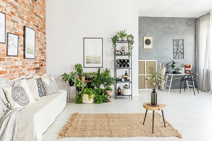 salon decorado con plantas