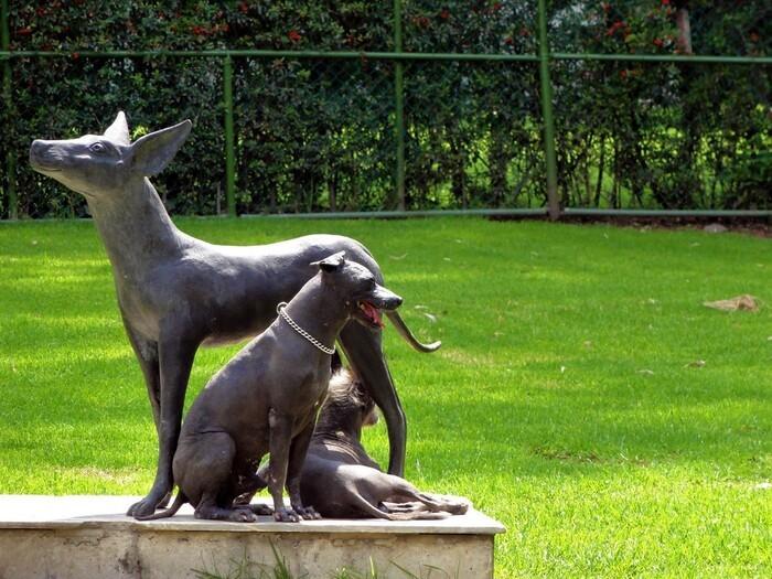 Museo Dolores Olmedo jardines