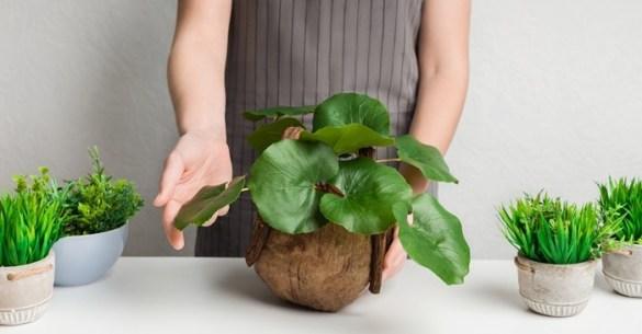 macetas pequeñas hojas mesa