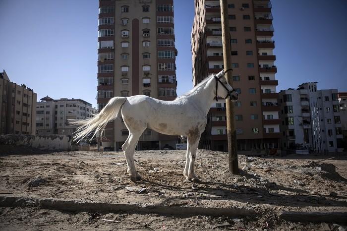 Un caballo blanco en la arena con edificios al fondo