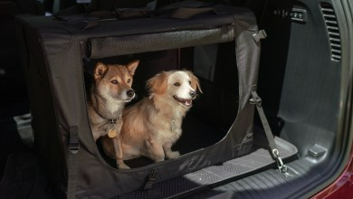 Photo of Pacifica & Wrangler Awarded On 10-Best Cars For Dog Lovers List: