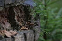 Naturen återtar
