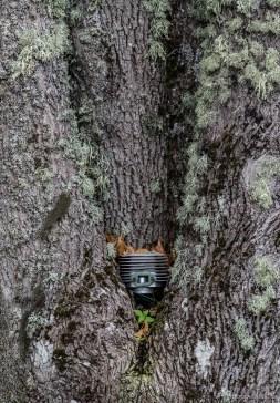 Det är här de växer på träd...