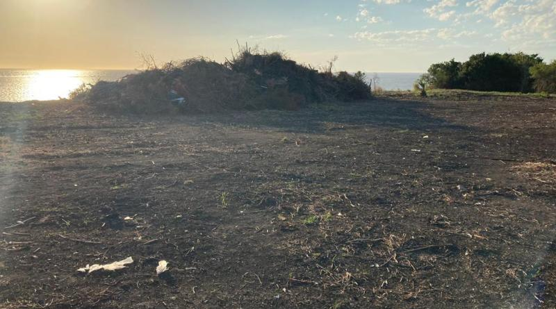 Envían denuncia al MGAP por una tala de montes nativos en Arazzati