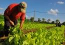 El 15 de abril será el día del productor rural