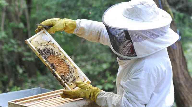Justicia falló a favor de apicultores del departamento por muerte de colmenas