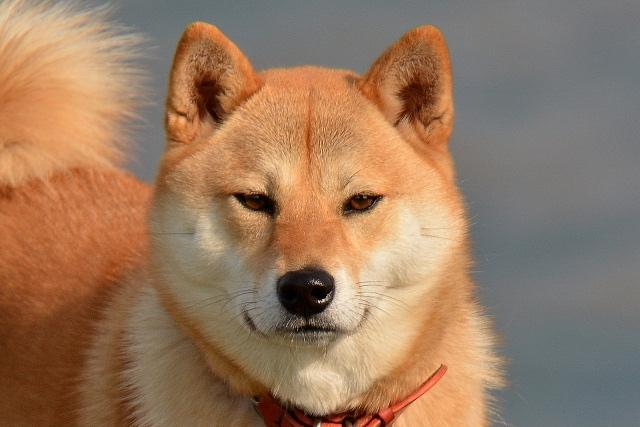 6種しかいないの!?日本の犬種