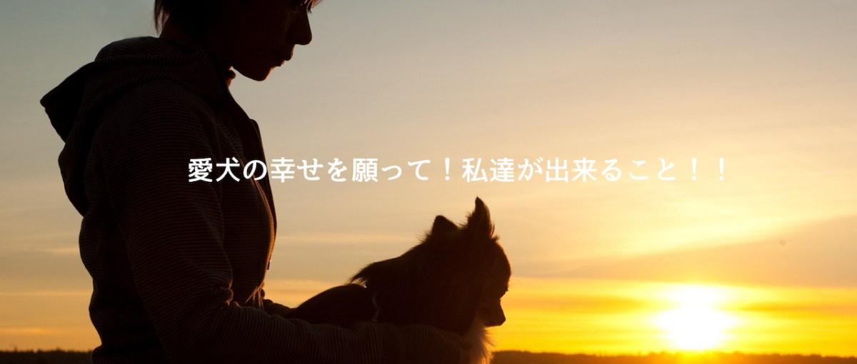 「最愛の愛犬を亡くした時」目が開いているのは苦しいからじゃないですよ!安心してくだい。