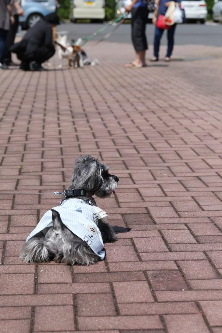 モラキジドッグドッグ 犬部フェスタ 我孫子住宅公園