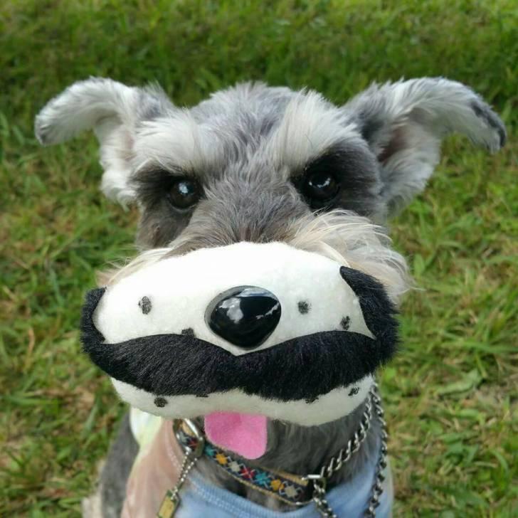 モラキジドッグ 髭犬