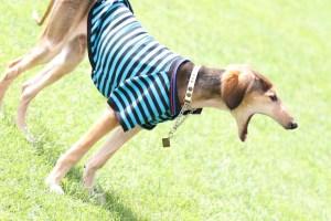 アウトドアドッグフェスタin八ヶ岳2017 モラキジドッグ 犬カメラ