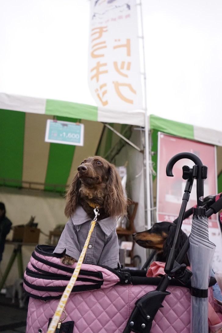 モラキジドッグ 駒沢わんわんカーニバル2017