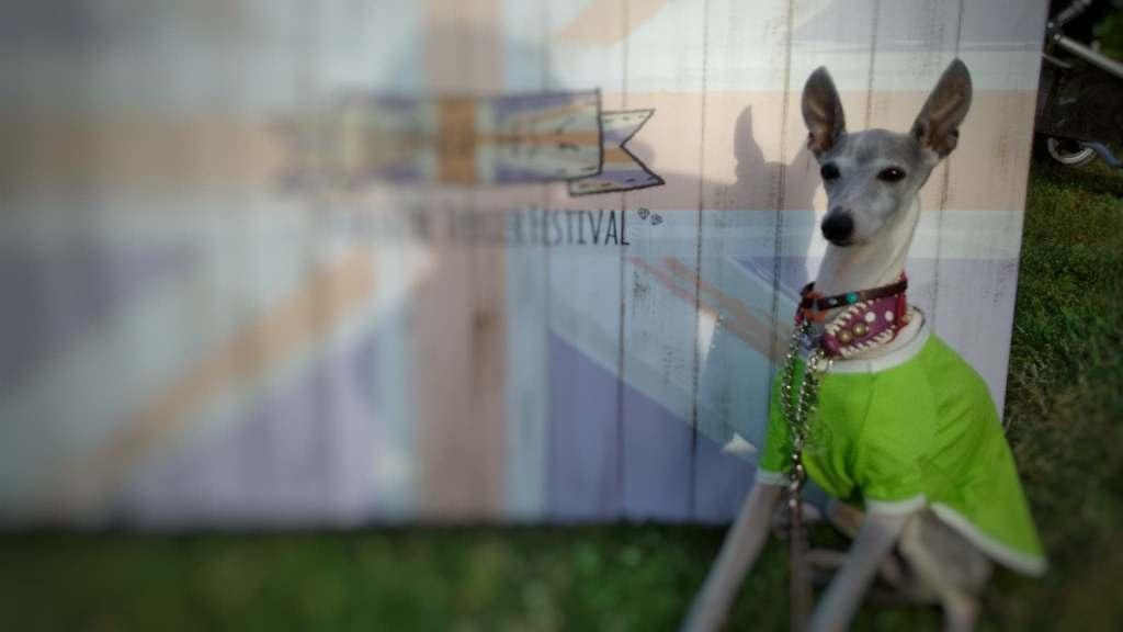 モラキジドッグ 犬写真 愛犬写真 Snapseed スマホアプリ